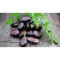 Бобы Русские черные овощные Арт. 5111 | Семена